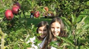 Apfelernte 2011